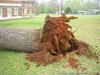 I&GN Railroad - downed tree