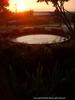 Water Pool in Vicksburg