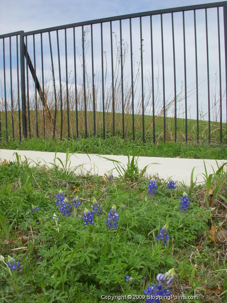 Bluebonnets and Flower Mound